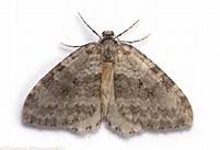 Moth Group Report – Linghurst Lakes